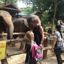 Stop to feed the elephants
